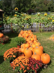 Pumpkins pack a punch of nutrients!